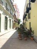 Havannacigarr - Kuba Royaltyfria Bilder