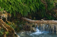 Moss hangs from a tree branch that stretches to an embankment on the Havasu creek. stock photo