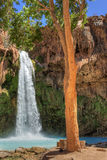 Havasu Fall Tree royalty free stock photography