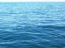 Havblått Arkivfoton