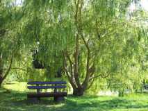 Have a break. A bench surrounded by trees Stock Photo