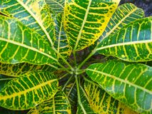 Close-up photo of green leaf royalty free stock photo