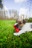 Have a new puppy. Stock Photography
