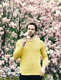 Have a nice day. New life and optimism. Spring season concept. Man holding magnolia flower in park with blossoming trees. Macho with beard in yellow sweater on stock image