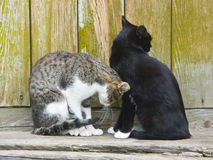 Have quarrelled. The image of two cats who have turned away from each other Royalty Free Stock Photo