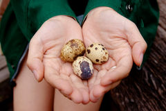 Have some eggs. A pair of hands holding 3 eggs stock images