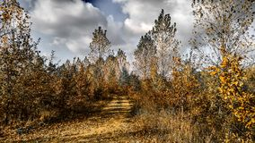 Have a walk in Forest Royalty Free Stock Photography