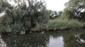 Havel河 小船是驾驶,通过与草甸和杨柳尝试的典型的风景 哈维尔兰县地区 德国 影视素材
