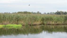 Havel河 小船是驾驶,通过与草甸和杨柳尝试的典型的风景 哈维尔兰县地区 德国 股票视频