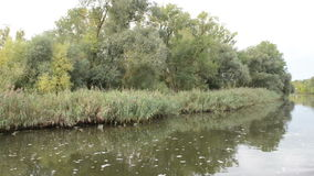 Havel河 小船是驾驶,通过与草甸和杨柳尝试的典型的风景 哈维尔兰县地区 德国 股票录像