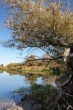 Havel flodlandskap under hösttid vattenreflexion av cl royaltyfria bilder