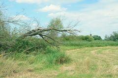 Havel river landscape with dead willow tree. storm damage. vinta Royalty Free Stock Photos