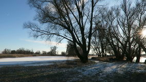 Havel river landscape with flood on meadow in winter. willow trees in background Havelland, Brandenburg in Germany stock video
