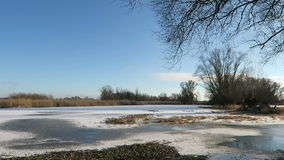 Havel river landscape with flood on meadow in winter. willow trees in background Havelland, Brandenburg in Germany stock footage