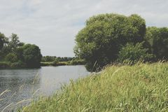 Havel river landscape with old willow trees in summertime. Vinta Royalty Free Stock Images