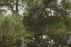 Havel river landscape with old willow trees in summertime. Vinta Stock Photo