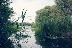 Havel river landscape with old willow trees in summertime. Vinta Royalty Free Stock Photos