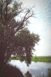 Havel river landscape with old willow trees in summertime. Vinta Stock Photography