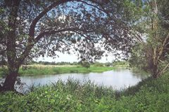 Havel river landscape with old willow trees in summertime. Vinta Stock Image