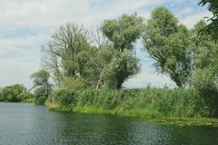 Havel river landscape with old willow trees in summertime. Vinta Stock Photos
