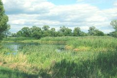 Havel river landscape at summer time (Havelland, Germany) Stock Images