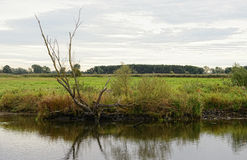 Havel river landscape with willow tree and meadows Royalty Free Stock Image