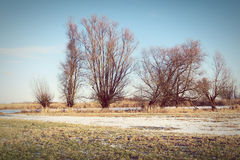 Havel river meadows in winter with typical willow trees Stock Image