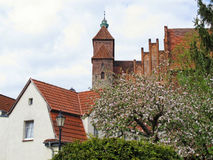 Havelberg Cathedral with cherry tree blossom in  front Stock Photography