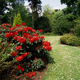 Haven. Formal garden with a red Rhodendrum bush in foreground stock images