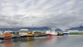 Haven van Hofn in Zuid-IJsland stock fotografie
