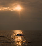 Havenbruinvis tegen zonlicht royalty-vrije stock foto's