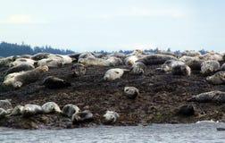 Havenverbindingen die op Belle Chain Islands zonnebaden, BC stock afbeelding