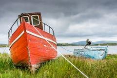 Haverier på sjösidan av Connemara Fotografering för Bildbyråer