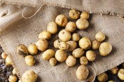 Haversted nya potatisar och förlagt i en säckvävpåse o fotografering för bildbyråer