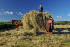 Havest time. A couple of elderly peasants load the hay cart. Their guard rests in the shade and the mule in harness waits patiently Royalty Free Stock Image