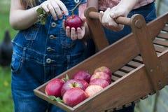 Havesting Frucht Lizenzfreie Stockbilder