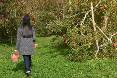 Havesting i begrepp för nedgångsäsong Tillbaka sida av bonden Woman med Royaltyfri Bild