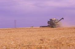 Havesting vetefält för traktor royaltyfri foto