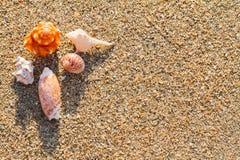 Havet beskjuter på sanden på stranden Arkivfoton