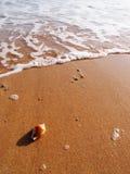 Havet beskjuter på solig strand Royaltyfri Fotografi