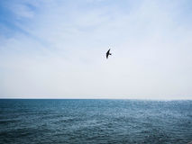 Havet och svalan Royaltyfri Bild