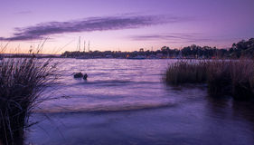 Havet på skymning med segelbåtar Royaltyfria Foton