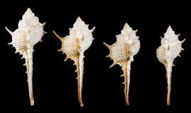 havet shells olikt Royaltyfri Fotografi