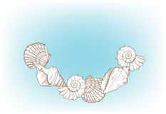 Havet shells ramen Royaltyfria Foton