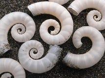 havet shells spiral Royaltyfri Foto