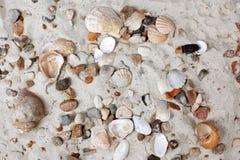 havet shells stenar royaltyfri bild