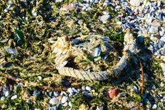 havet shells stenar royaltyfri foto