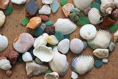 havet shells stenar Arkivbilder