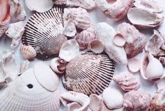 havet shells white Arkivbild