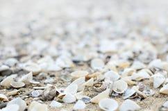 havet shells white Arkivfoton
